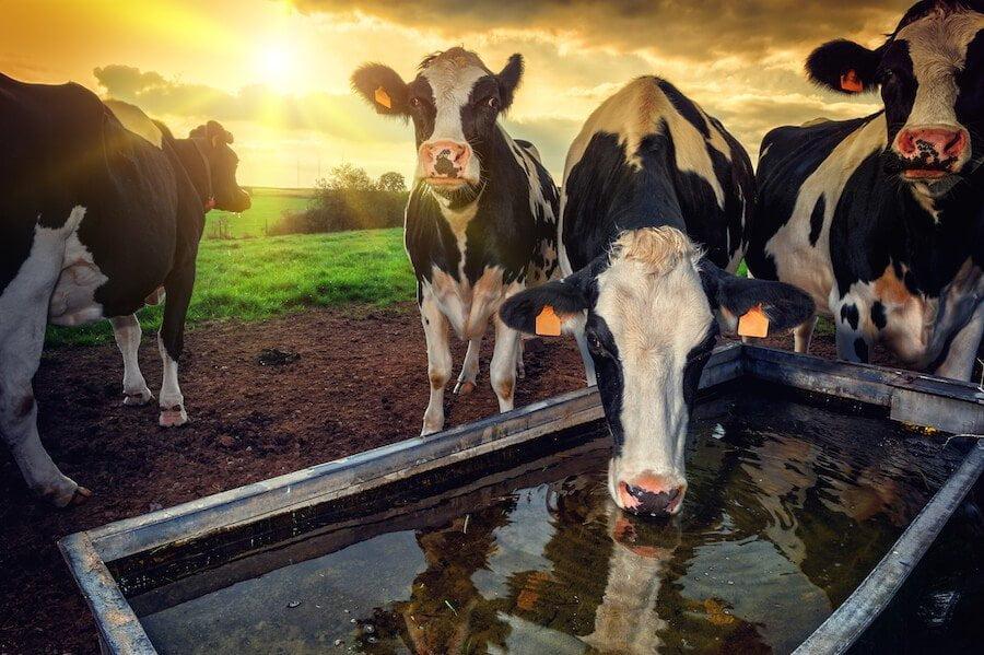 L'alimentazione, la salute e la sostenibilità ambientale del nostro stile di vita
