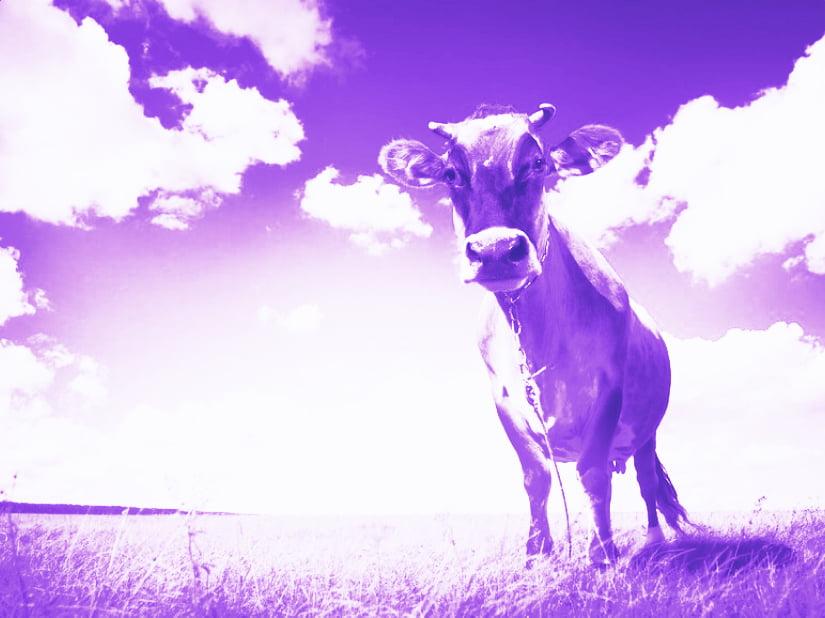 Allevamenti Intensivi Mucche